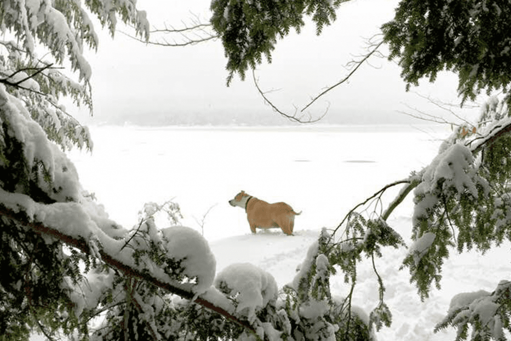 Photo of dog on the snowy lake surrounded by evergreens